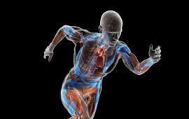 Parametry biomechaniczne w kończynach dolnych podczas chodu i nordic walking z różnymi prędkościami