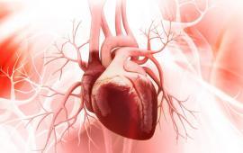 Nordic Walking może bezpiecznie zwiększyć intensywność treningu fizycznego u zdrowych osób i pacjentów z przewlekłą niewydolnością serca