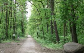 Trasy Nordic Walking – ścieżka zdrowia czy ścieżka edukacji leśnej? Przykłady z terenu Wielkopolski